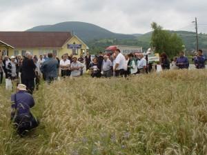 La marginea lanului de grîu Balaton