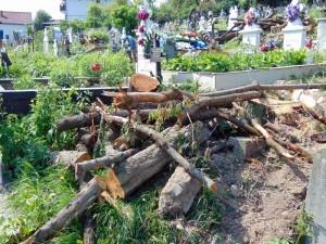 Copacii tăiaţi din cimitir