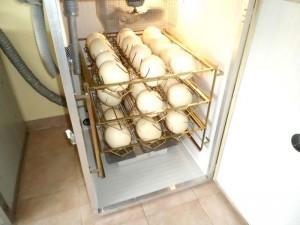 Ouă în incubator