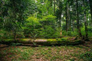 Teren cu vegetaţie forestieră