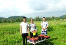 Marin, Vasile şi Dorin Leşe, la cules de căpşuni