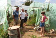 Flaviu Costin între solariile cu legume