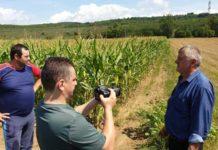 Unii dintre fermierii păgubiţi de mistreţi, hotărîţi să nu mai lucreze terenurile