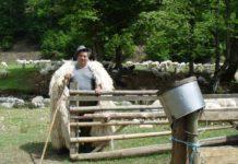 Crescător de oi din Cicîrlău