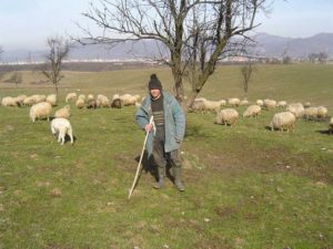 În luna noiembrie, păstor cu oile pe păşunea satului Groşi