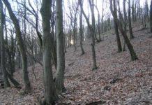 Pădure în Săbişa, Ocolul Silvic Tăuţii Măgherăuş