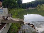 lacul nistru populat cu peste