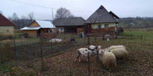 Gospodărie țărănească din Costeni