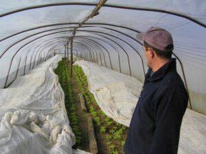 Salata verde acoperită cu folie microporoasă
