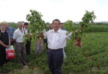 Agronomul IoanVariu din Tăuţii Măgherăuş (cultivator de cartofi)