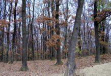Pădure de stejar dintre Şomcuta Mare şi Vălenii Şomcutei