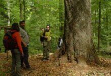 Pădure virgină din Groşii Ţibleşului
